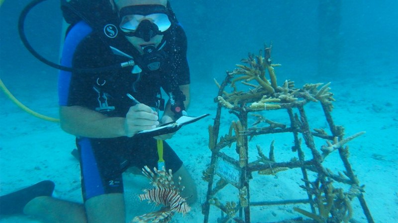 How to have Career in Marine Biology